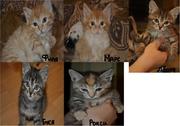 Эти малыши-котята ищут хозяев!