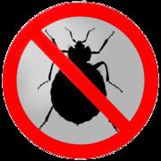 Выведение клопов,  насекомых в вашем доме