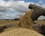 Зерно: Пшеница Ячмень Овёс Лён Отруби Семена подсолнечника